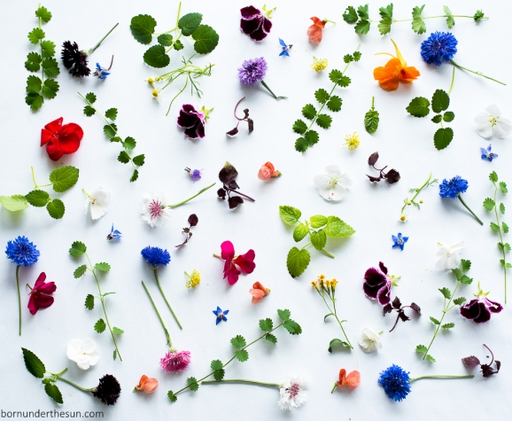 edible flowers and leaves